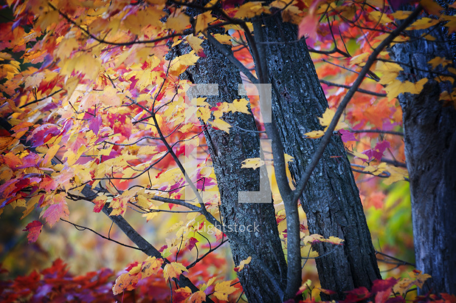 yellow and red leaves on a tree