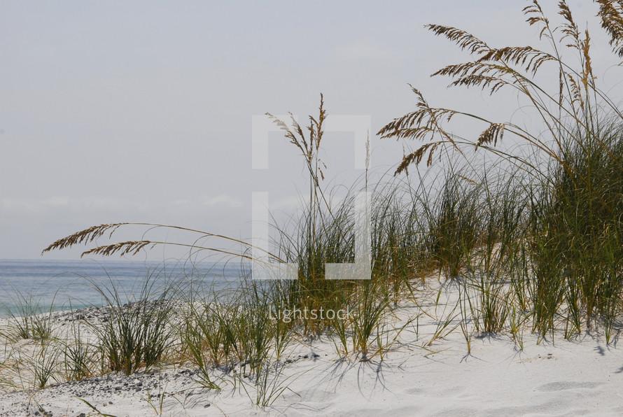 Grass growing on sandy beach