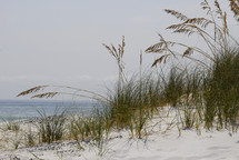 Grass growing on sandy beach