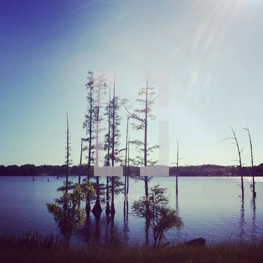 trees growing in lake water
