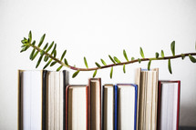 branch over a row of books