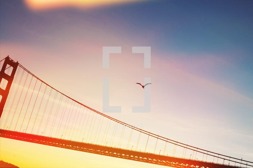 Golden gate bridge and seagull