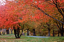 Autumn foliage in the park.