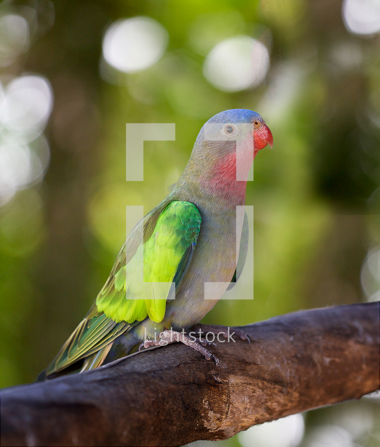 Colorful parrot perched on tree limb.