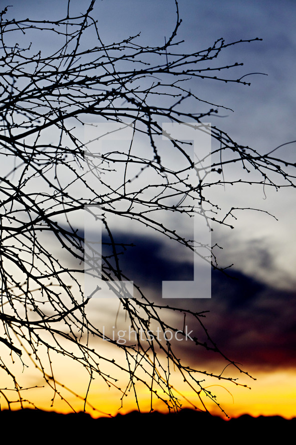 Bare tree branches sunset silhouette