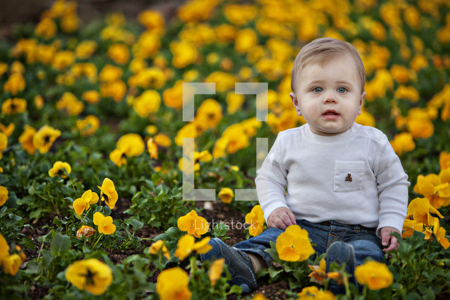 toddler boy sitting in a field on pansies
