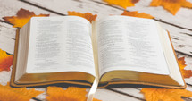 open Bible on fall leaves