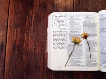 pressed roses on the pages of a Bible