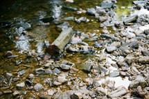 peebles in a creek