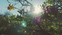 sunlight through tree branches and green leaves