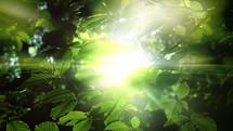 bright sunlight through green leaves