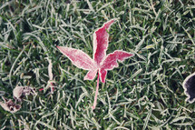 Red leaf in grass.