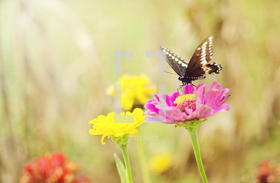 butterfly on a flower