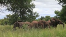 elephants in the savanna