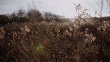 breeze blowing grasses in a field
