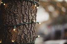 string of lights around a tree