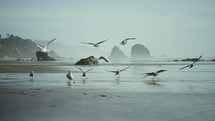 seagulls landing on a beach
