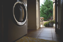 A dog standing at the open doorway of a laundry room.