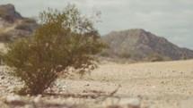 bush in a desert