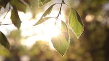 sunlight on green leaves