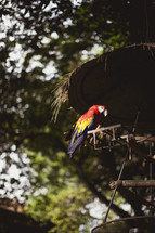 A parrot sitting on a feeder