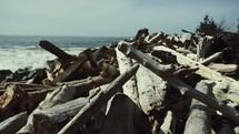 driftwood along a shore