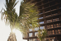 A palm tree next to a tall hotel