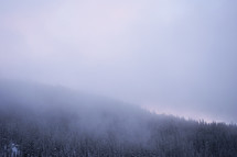 fog over a mountain top forest