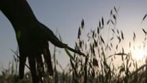 brushing her hand over tall grasses