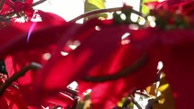 red flowers in sunlight