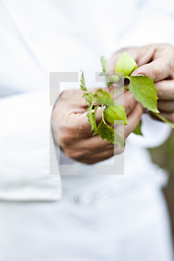 Chef holding a fresh vegetable branch