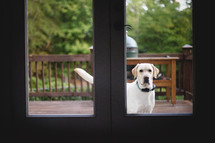 a dog at the back door window