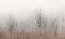 Dormant trees in a field through the fog.