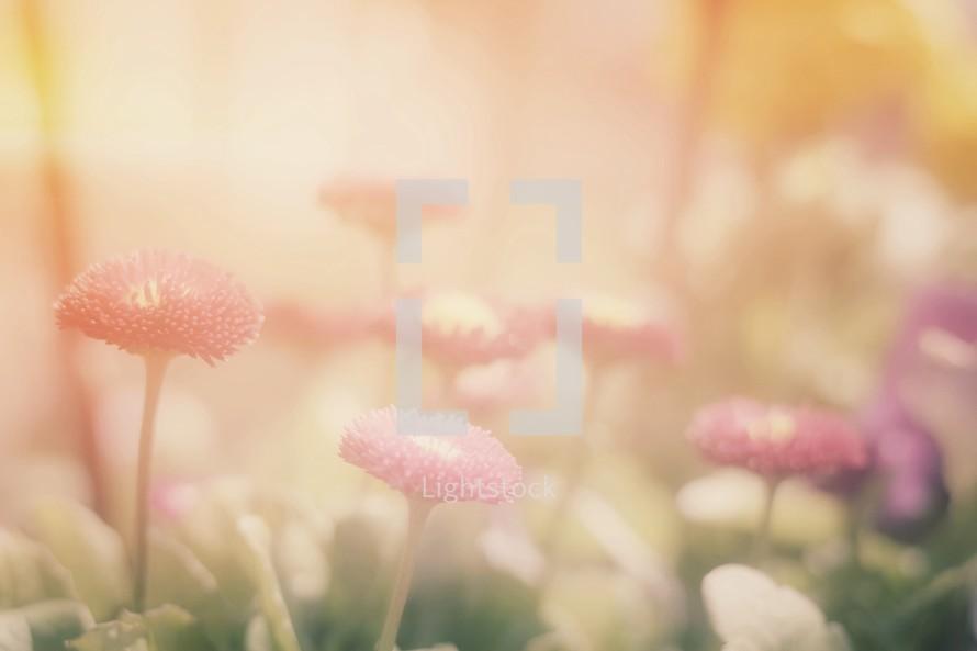 intense sunlight on flowers