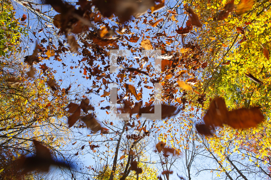 Fall leaves falling from trees