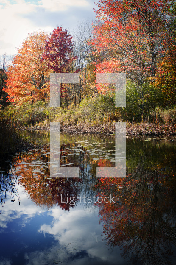 Fall creek trees