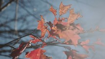 brown fall leaves on a branch blowing in the breeze