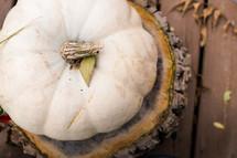 a white pumpkin on a tree stump