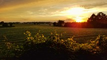 farmland field at sunset