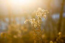 warm sunlight on brown vegetation