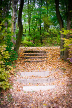 Tree-lined path with steps covered with fall leaves.