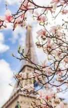 pink spring flowers and Eiffel tower