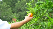 a man picking an orange of a tree