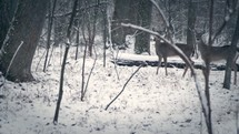 deer in a snowy forest