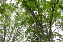 summer leaves on trees