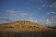 Field of wheat in Costa Rica