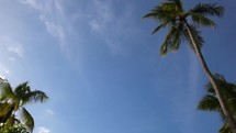 looking up at palm trees i the sky