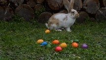 a bunny and Easter eggs