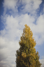 Large tree on sunny day