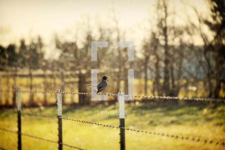 Bird on fence wire